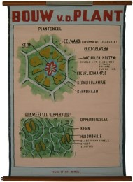 Serie - [Botanische platen]